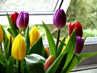 How To Sell Your Home On A Budget - Tulips On Window Of London Home