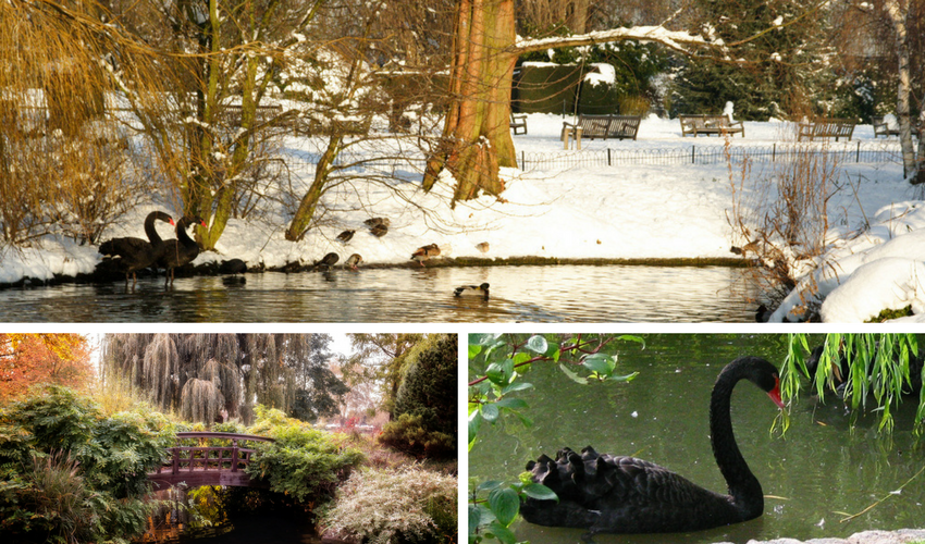 Gardens - Winter To Summer - Queen Mary's Gardens - Images Via Flickr - By James Offer, Garry Knight & Tom Ayres