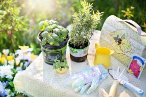 Garden Tips: Which Tools Should A Gardener Keep
